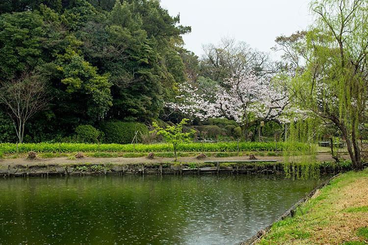 桜咲く御花の東庭園