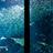 マリンワールドの大水槽