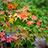 太宰府の紅葉