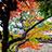 太宰府の秋