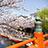 桜の松月乗船場