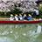 桜と柳川川下り