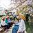 舟から見上げる桜