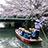 桜とどんこ舟