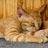 寝る猫2匹
