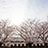 多聞櫓の桜