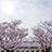 多聞櫓と桜